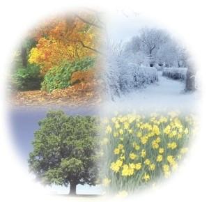 Seasonal Tips